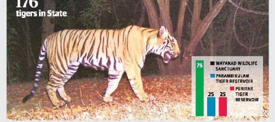 Wayanad sanctuary is tiger kingdom in Kerala